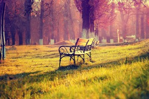 6927796-park-bench-wallpaper